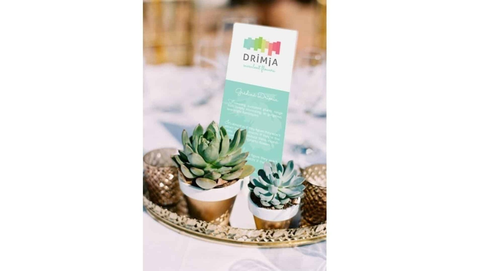 Drimia, branding