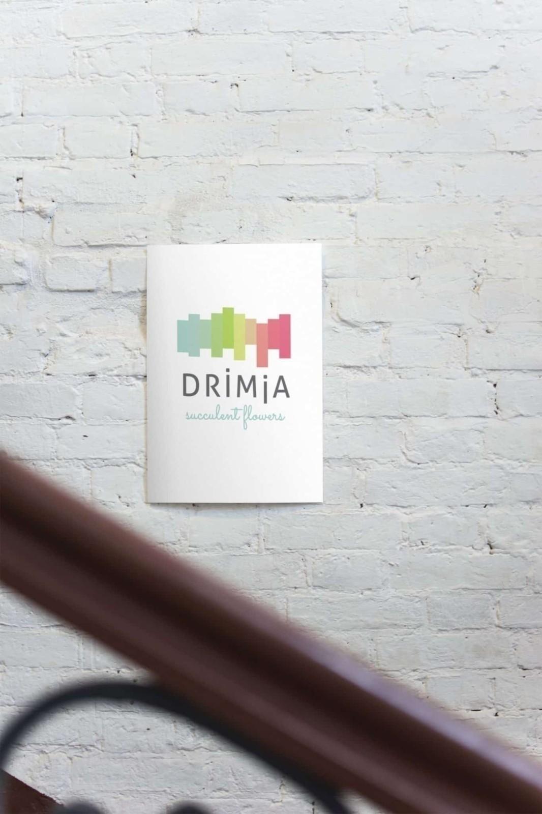 Drimia, brand identity process, suculent flowers